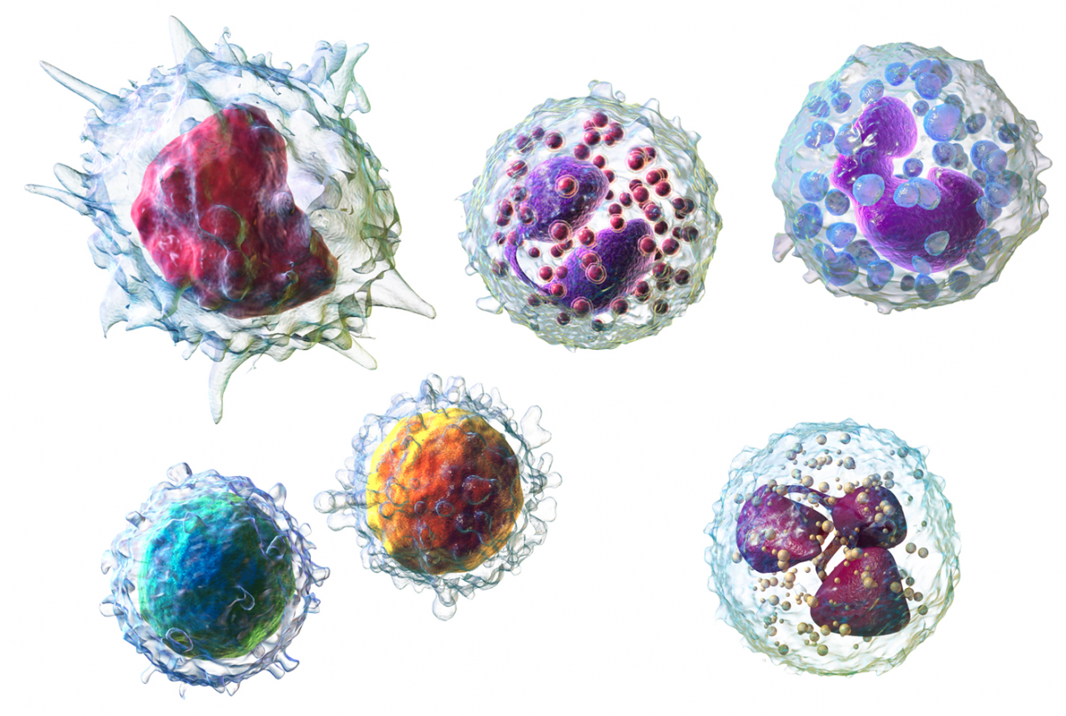 Scientists reminded immune cells on what side they should be