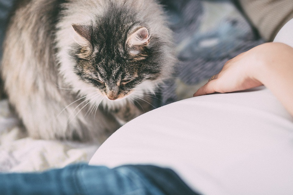 """First results of the """"Cats Project"""" were published in the international project Russia Beyond"""