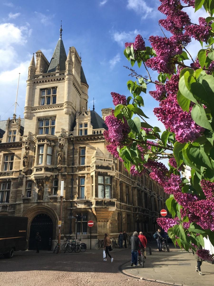 Обмен опытом: система наставничества Кембриджского университета