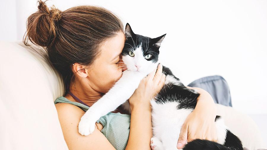 Cats Project: Scientists of Sechenov University & Medical University of Vienna are creating vaccine against cat allergies