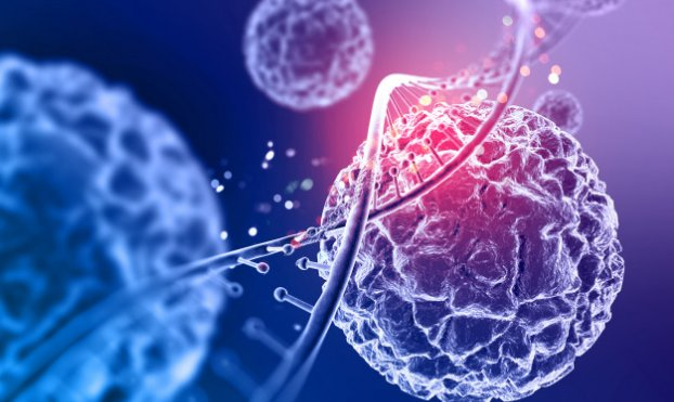 Sechenov University scientists discovered the role of iron in programmed cell death